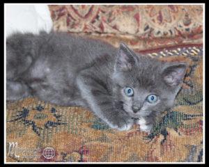 Chateau Woo Woo 6-21-15 and new gray kitty-06
