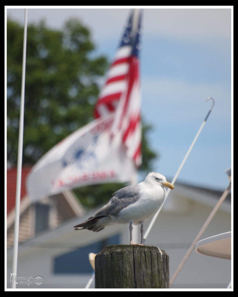 Manasquan-On-The-SS-Barnacle-7-24-16-13